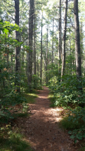 Trails of Massachusetts, Where to Hike, When to hike, Running